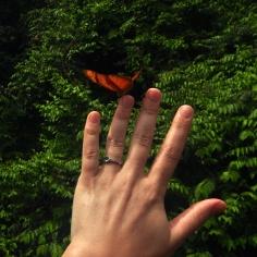Iguazu Brasil09