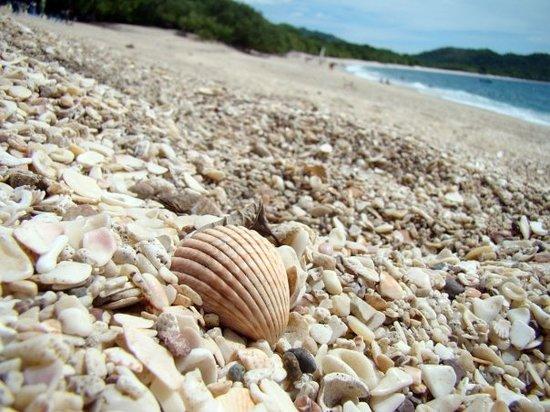 playa-conchal, tripadvisor